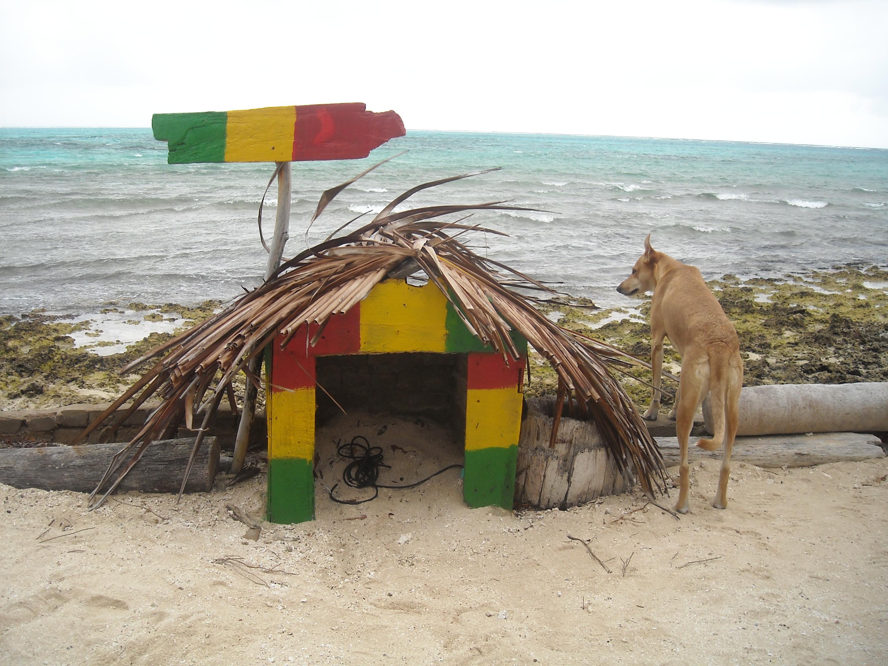 Este perro es el único habitante de Haynes Cay