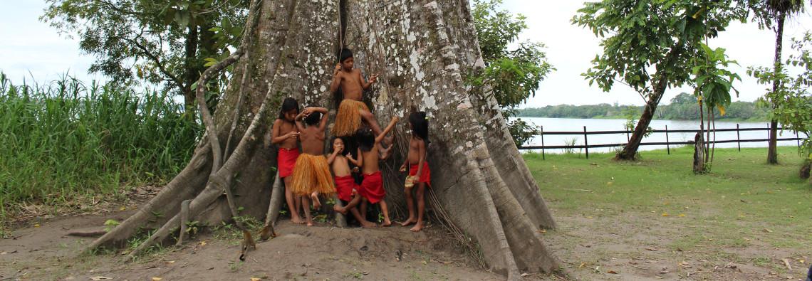 Top 10 Recomendaciones para viajar al amazonas