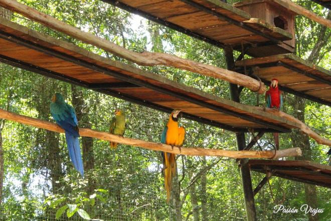 Guacamayas de colores en el Parque de las Aves.