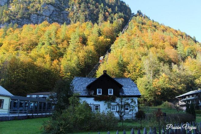 Curiosidades: Casa de Hallstatt con árbol en la fachada.