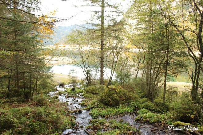 Naturaleza alrededor del lago.