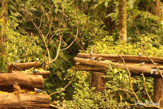 Avistamiento de aves desde una cabina de madera.