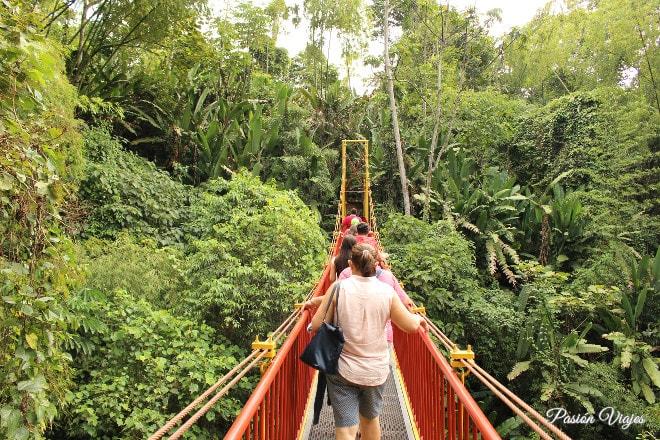 Puente colgante en el Jardín Botánico del Qundío.