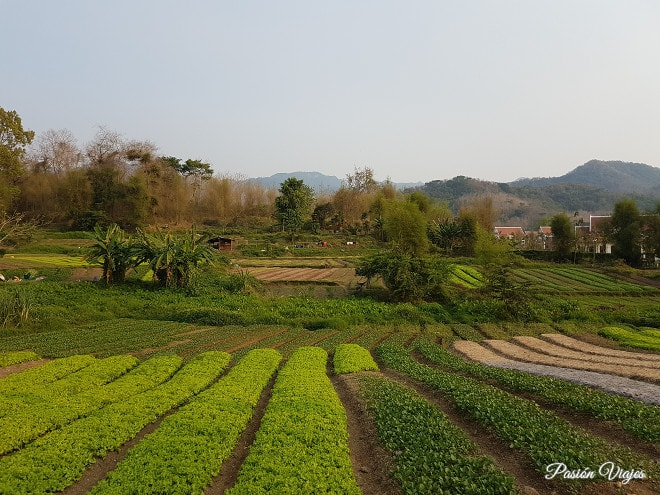 Paisaje de cultivos a las afueras de Luang Prabang.