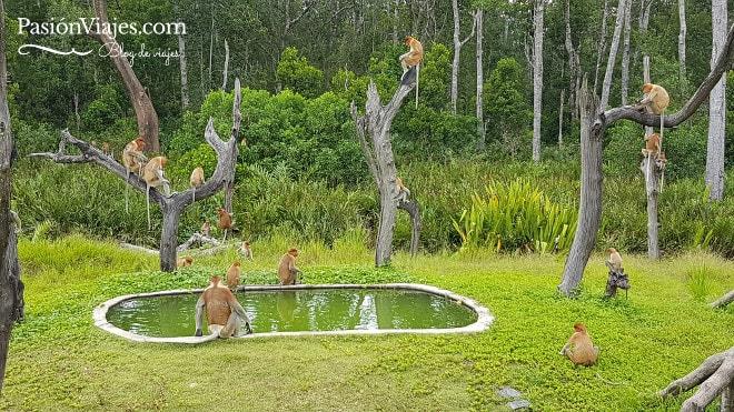 Plataforma B del santuario de monos narigudos.