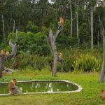 Sabah Borneo: Excursión desde Sandakan por libre