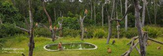 Sabah Borneo Excursión desde Sandakan por libre