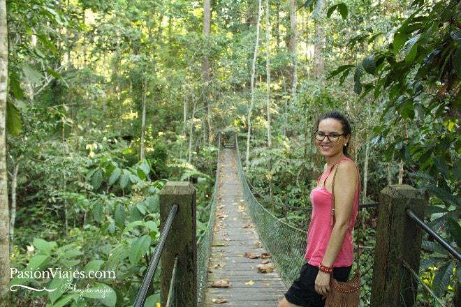El Rainforest Discovery Centre es ideal para hacer caminatas rodeado de naturaleza.