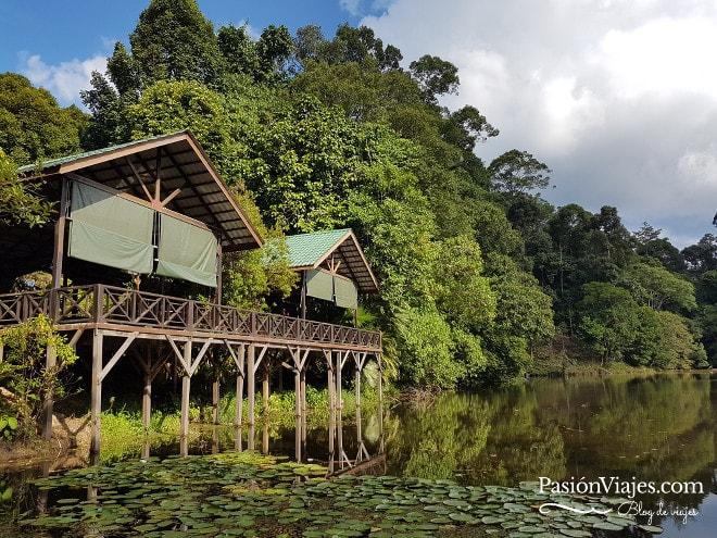 Lago en la entrada del Rainforest Discovery Centre (RDC).