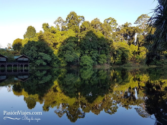 Atardecer en el Rainforest Discovery Centre.